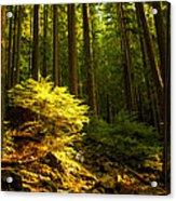 Forest Acrylic Print by Matt  Trimble
