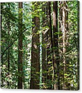 Forest Of Clover Acrylic Print