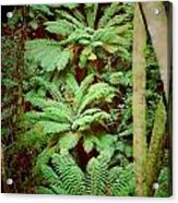 Forest Of Ferns Acrylic Print