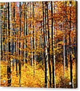 Forest Of Gold Acrylic Print