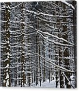 Forest Of Marburg In Winter Acrylic Print