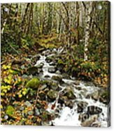Forest Overflows Acrylic Print