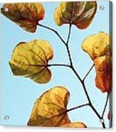 Forest Pansy Autumn Acrylic Print