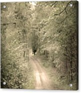 Forest Path Acrylic Print by Svetlana Sewell