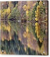 Forest Reflected In A Loch Acrylic Print