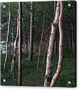 Forest, Shore Of Lake Superior Acrylic Print
