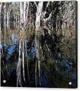 Forest Spin Acrylic Print