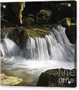 Forest Stream 2a Acrylic Print