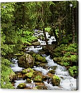 Forest Stream In Tatra Mountains Acrylic Print