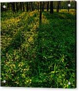 Forest Sunset Acrylic Print by Steve Gadomski