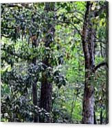 Forest Trees Acrylic Print