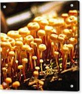 Forest Trifles Acrylic Print