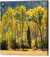 Forested Light Acrylic Print