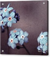 Forget Me Not 01 - S05dt01 Acrylic Print