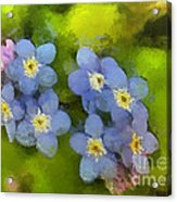 Forget-me-not Flower Acrylic Print