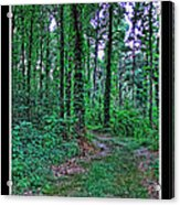 Forrest Trail Acrylic Print