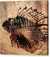 Fossil Acrylic Print