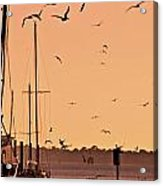 Fowl Sunset Acrylic Print
