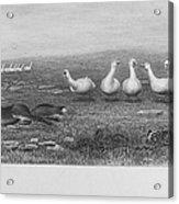 Fox & Geese, 19th Century Acrylic Print