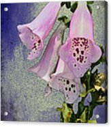 Fox Glove Blue Grunge Acrylic Print by Bill Cannon