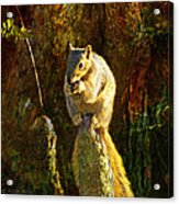 Fox Squirrel Sitting On Cypress Knee Acrylic Print