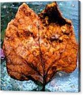 Foxy Leaf Acrylic Print