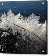 Fractal Frosty Ice Crystals Acrylic Print