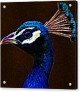 Fractalius Peacock Acrylic Print