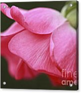 Fragrant Seduction Acrylic Print