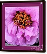 Framed In Purple - Abstract Floral Acrylic Print