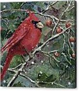 Franci's Cardinal Acrylic Print