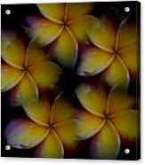 Frangipani Circle Of Color Acrylic Print