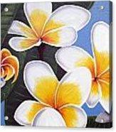 Frangipani I Acrylic Print