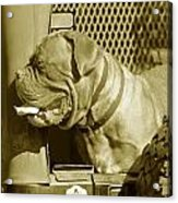 Frank The Dog 7827 In Sepia Acrylic Print