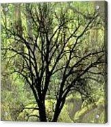 Freaky Tree 2 Acrylic Print
