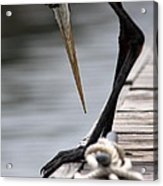 Fred The Great Blue Heron Acrylic Print