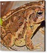 Freddie The Frog Acrylic Print