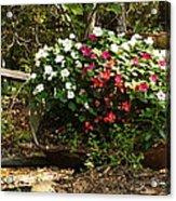 Free To Bloom Acrylic Print