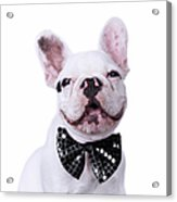 French Bulldog And Bow Tie Acrylic Print by Maika 777