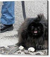 Frenchman And His Dog Acrylic Print