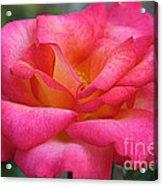 Fresh Floral Acrylic Print