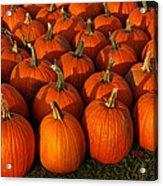 Fresh From The Farm Orange Pumpkins Acrylic Print