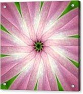 Fresh Pink Acrylic Print
