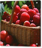 Fresh Red Plums In The Basket Acrylic Print