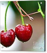 Fresh Wet Cherries Acrylic Print