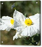 Fried Egg Flowers Acrylic Print