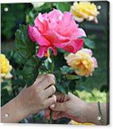 Friendship Rose Acrylic Print
