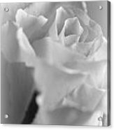 Friendship Rose In Black And White Acrylic Print by Mark J Seefeldt