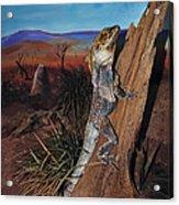 Frill-necked Lizard Acrylic Print