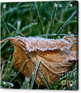 Fringed In Frost Acrylic Print